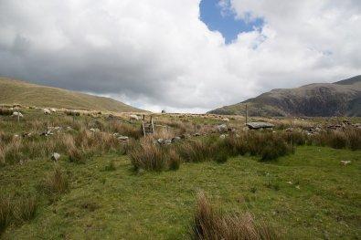 Clogwyn y Gwin Path and Maesgwm (105 of 135)