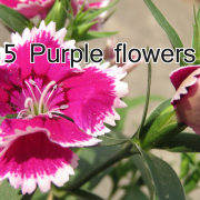 Download 5 purple folowers