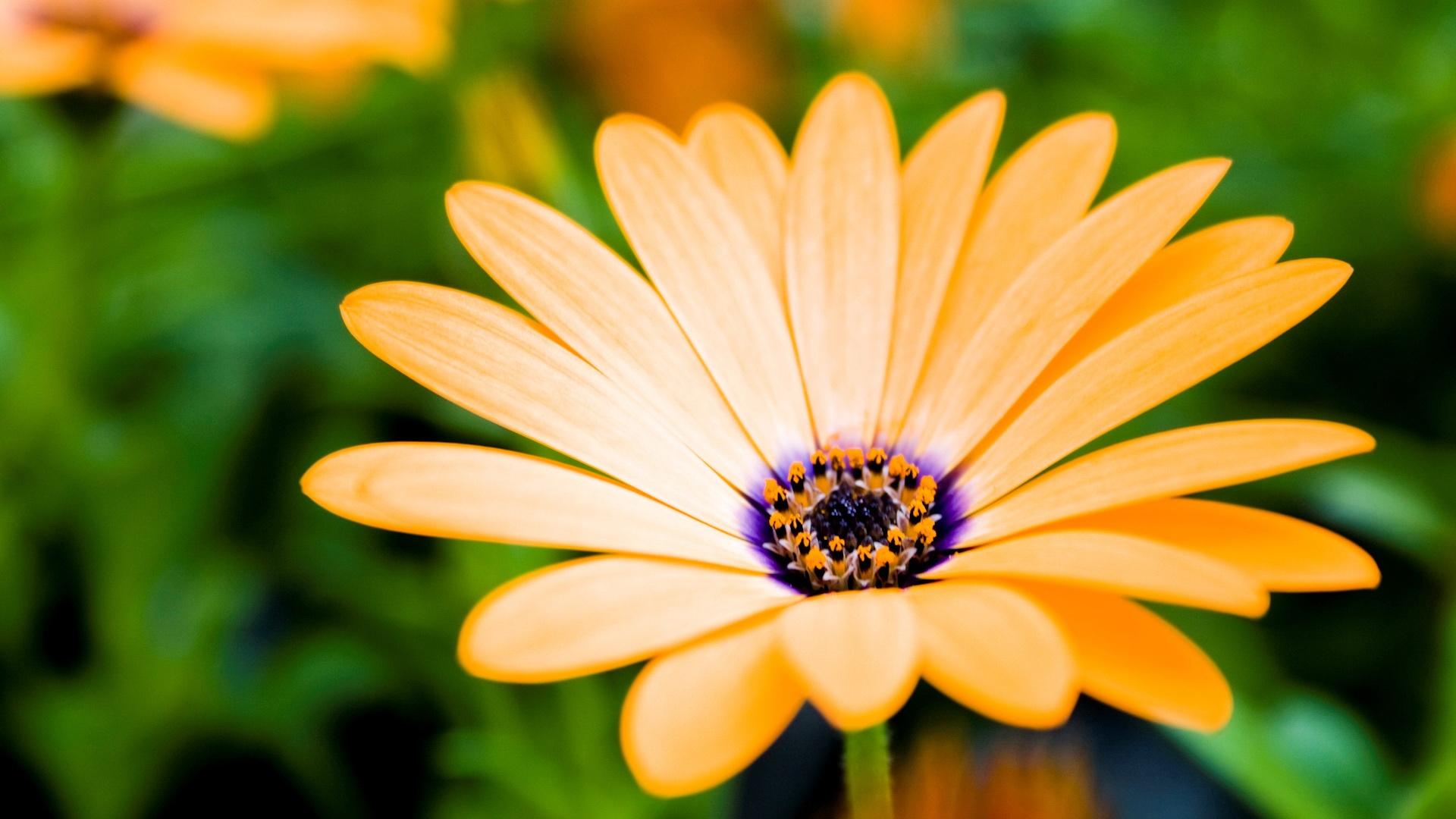 Fleurs nuage ciel dazur fleurs altavistaventures Choice Image