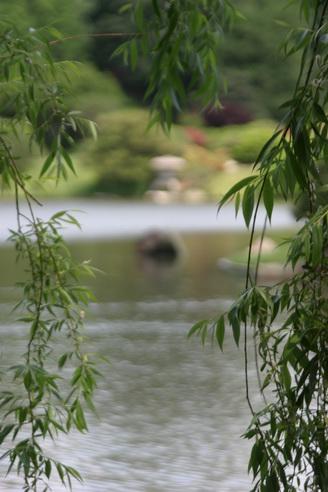 Willow Branches, Shaw's Gardens, Saint Louis, Missouri