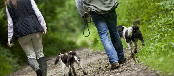 Walks for humans and dogs at Wallops Wood