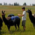 Llama Pack Trek In Eastern Oregon