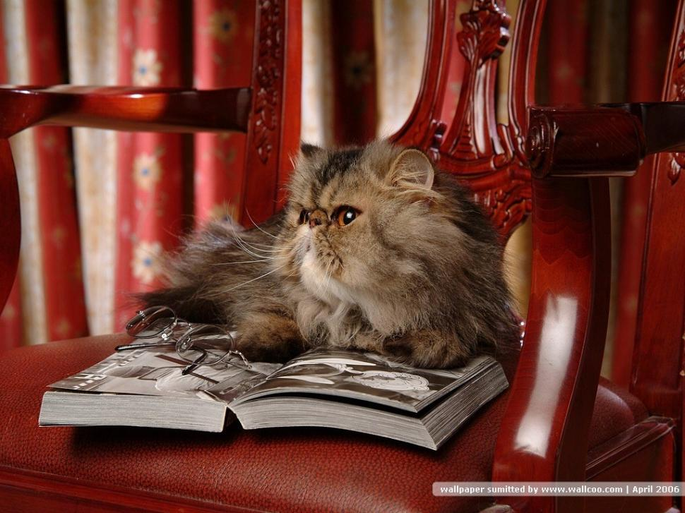 Image result for reading animals