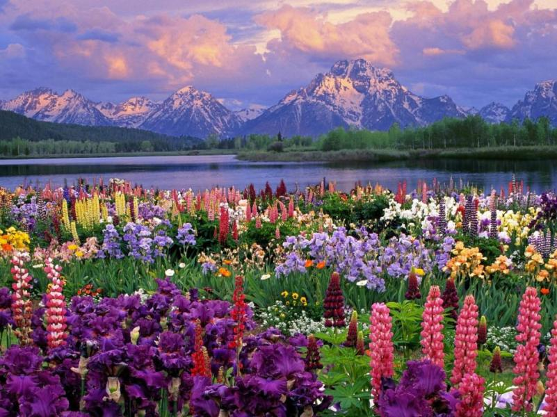 Spring Flower Mountain Photos wallpaper   flowers   Wallpaper Better Spring Flower Mountain Photos Wallpaper