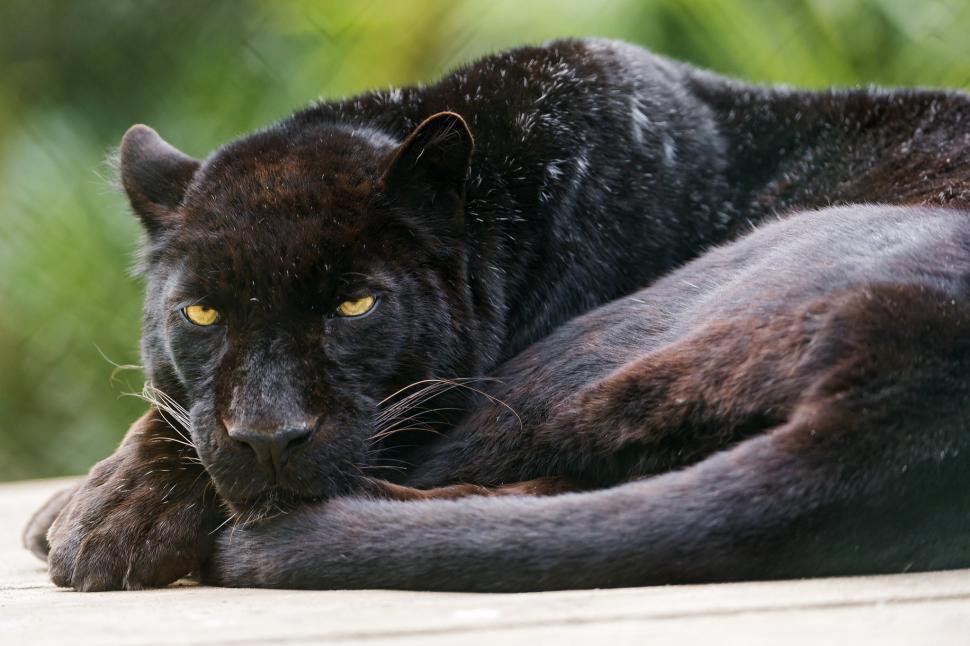 Cat Black Wallpaper 1080p