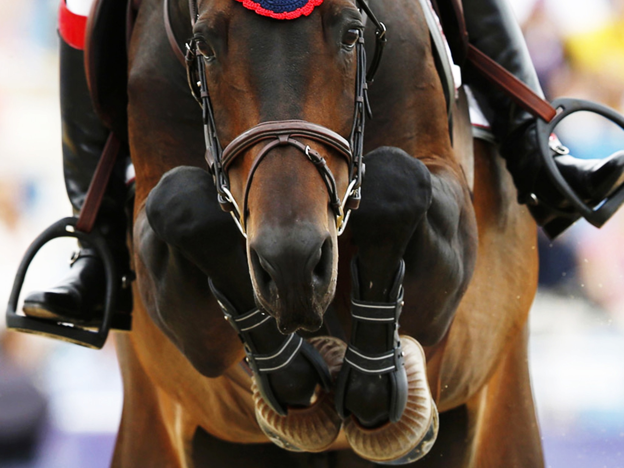 Equestrian Sport Wallpaper Free Horse Jumping Image