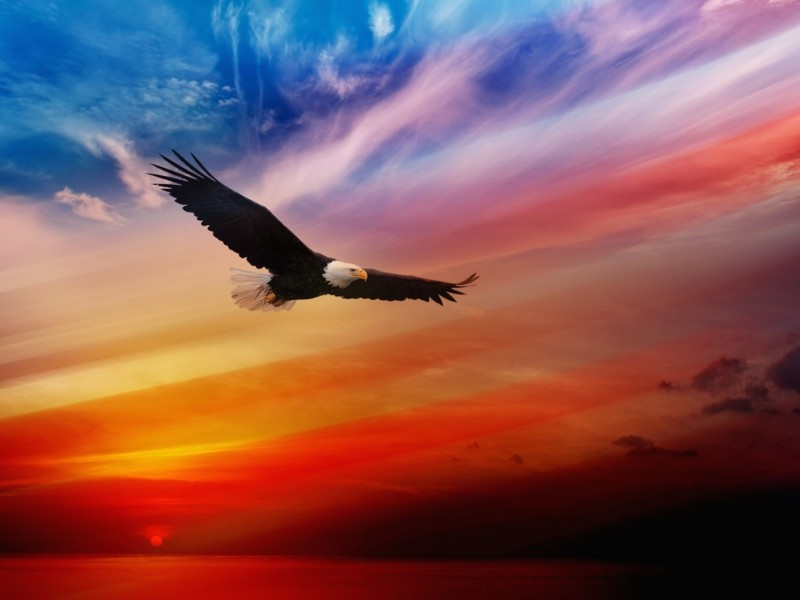 Image result for pictures of eagle soaring