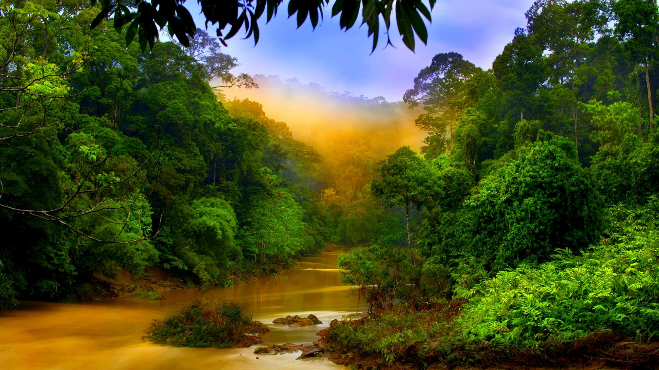 Rain Forest River Valley Mist Habitat Asia Ultra Hd