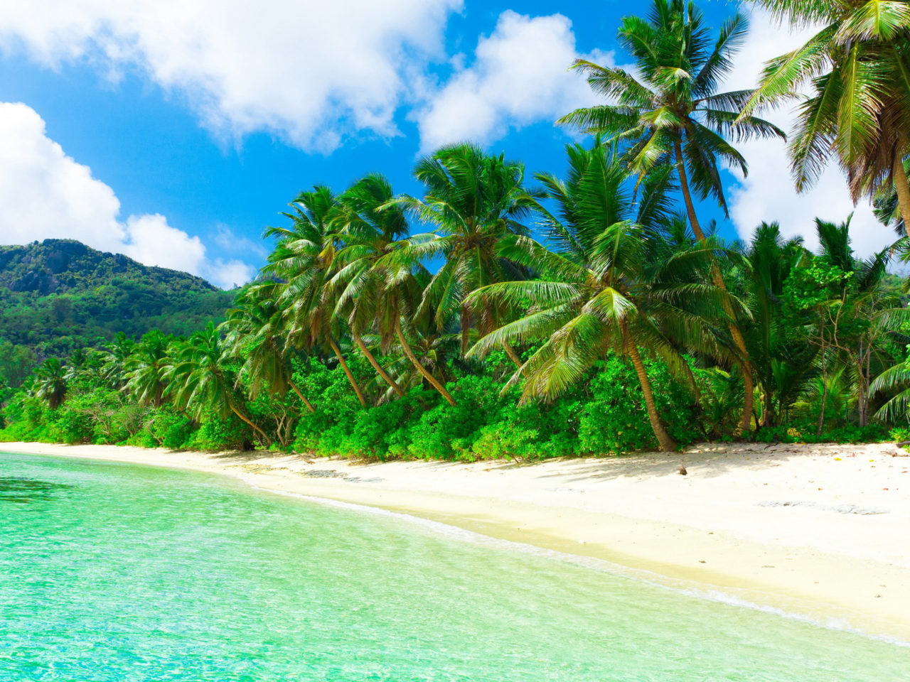 Tropical Paradise Beach Coast Sea Palm Trees Summer