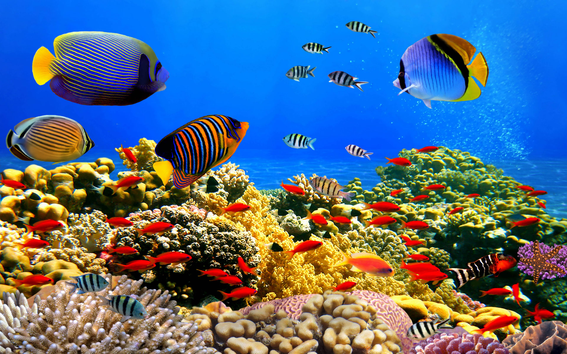 Image result for Underwater Colorful Fish