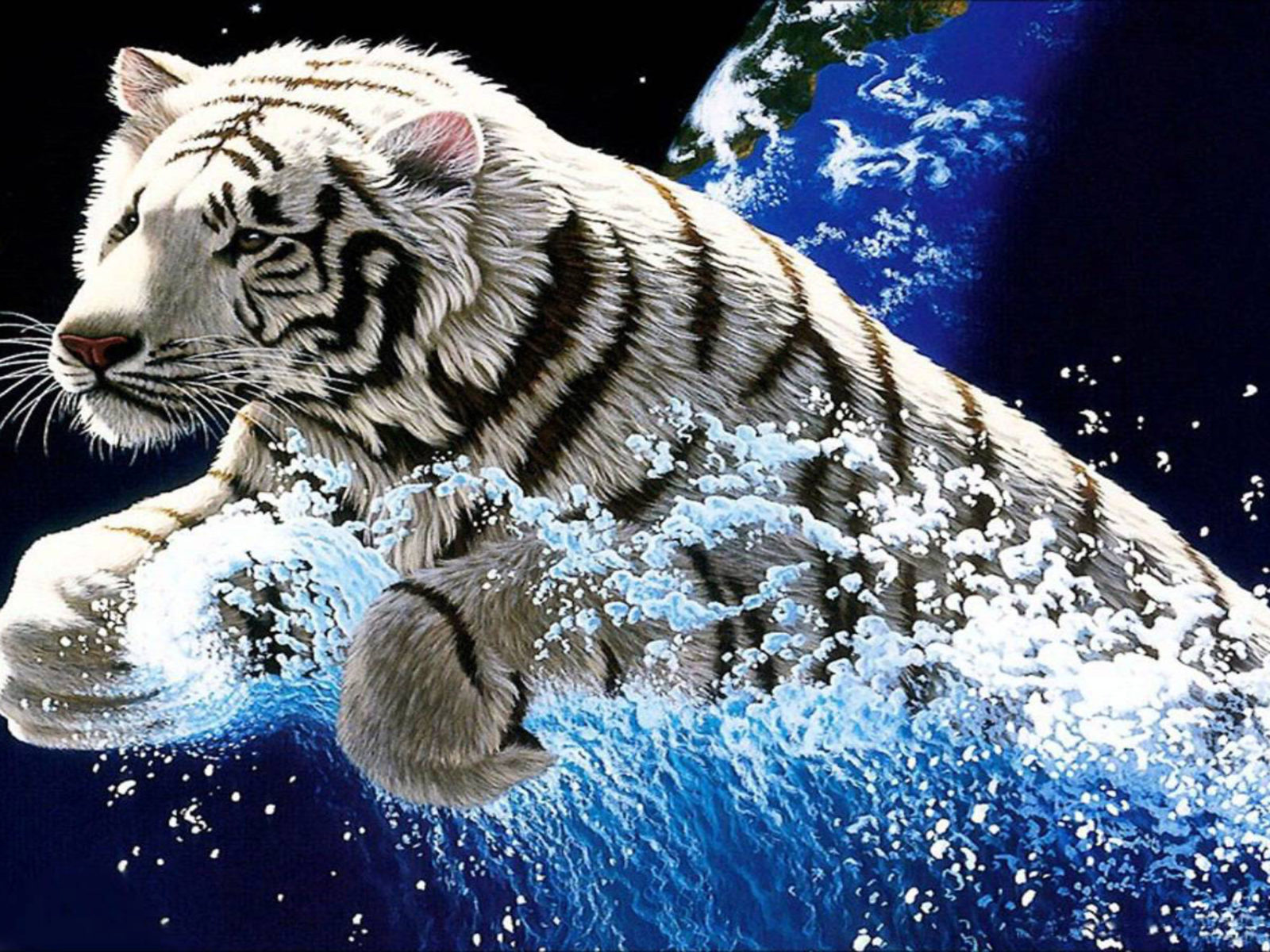 White Tiger Widescreen 3840x2400 Hd Wallpapers