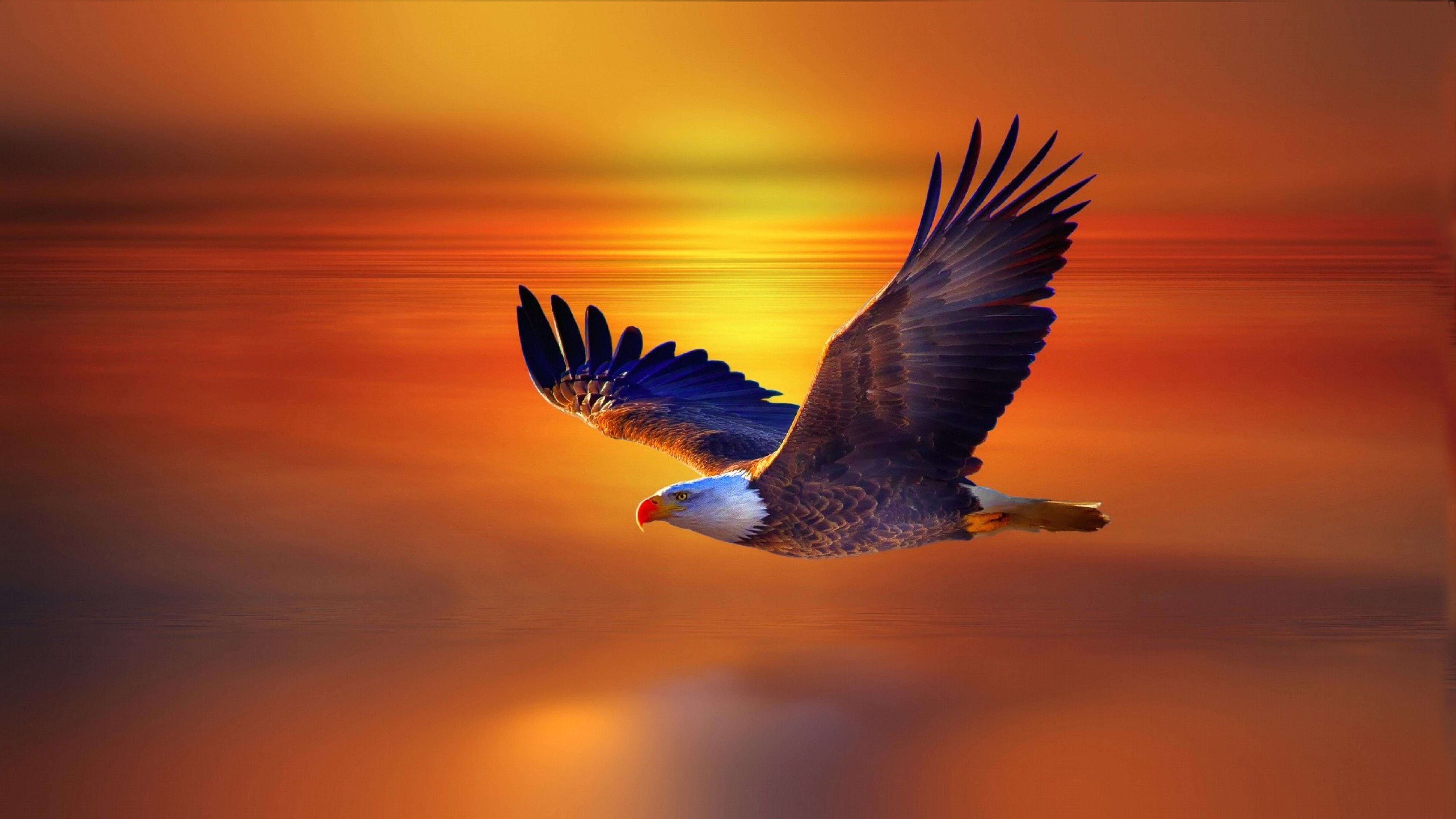 Philadelphia Iphone 5 Hd Eagles Wallpapers