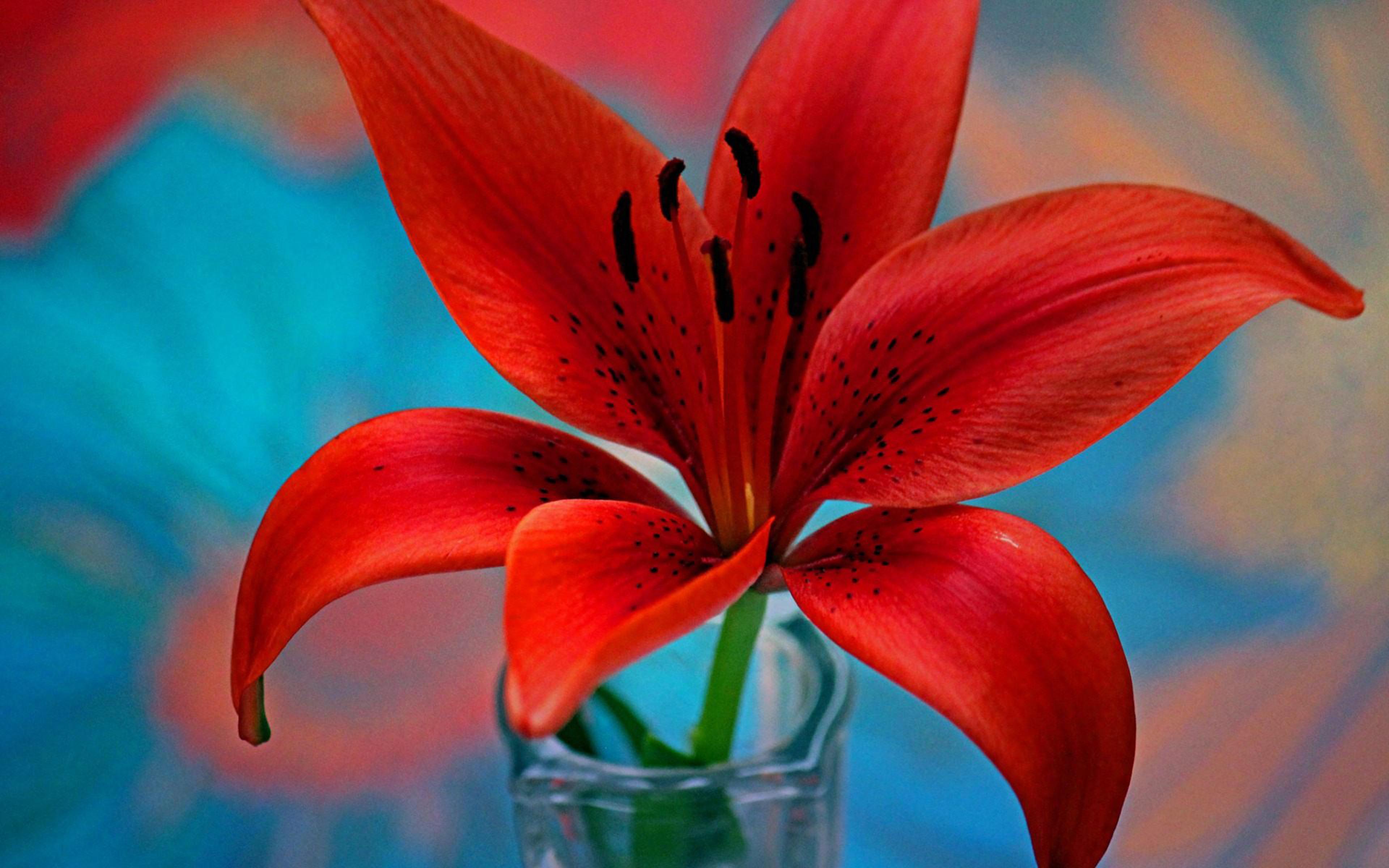 Red Lily Flower Wallpaper For Desktop Hd 3840x2400
