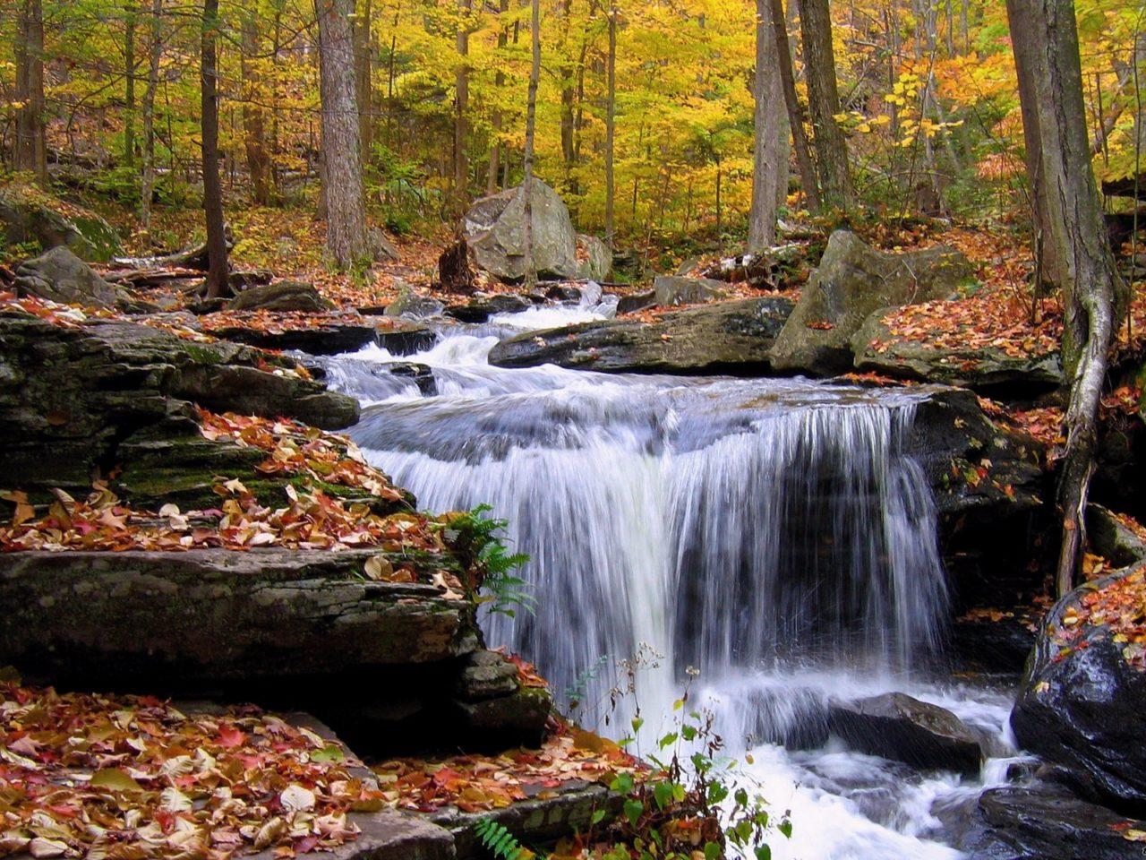 Art Autumn Fall Clip Images