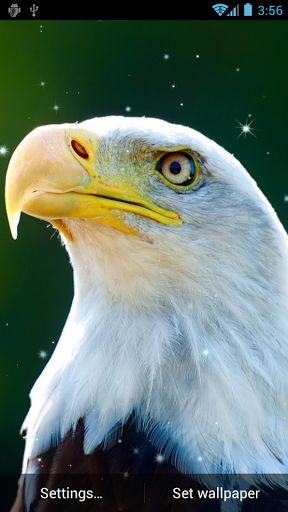 Eagle Live Wallpaper Gallery