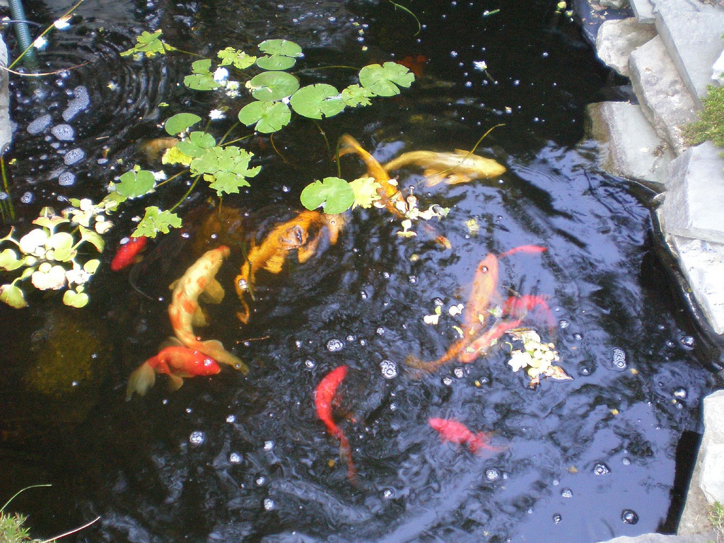 Fish Pond Definition