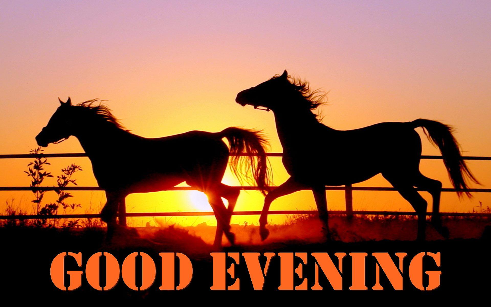 good evening horse running hd wallpaper #00192 | | wallpaperspick