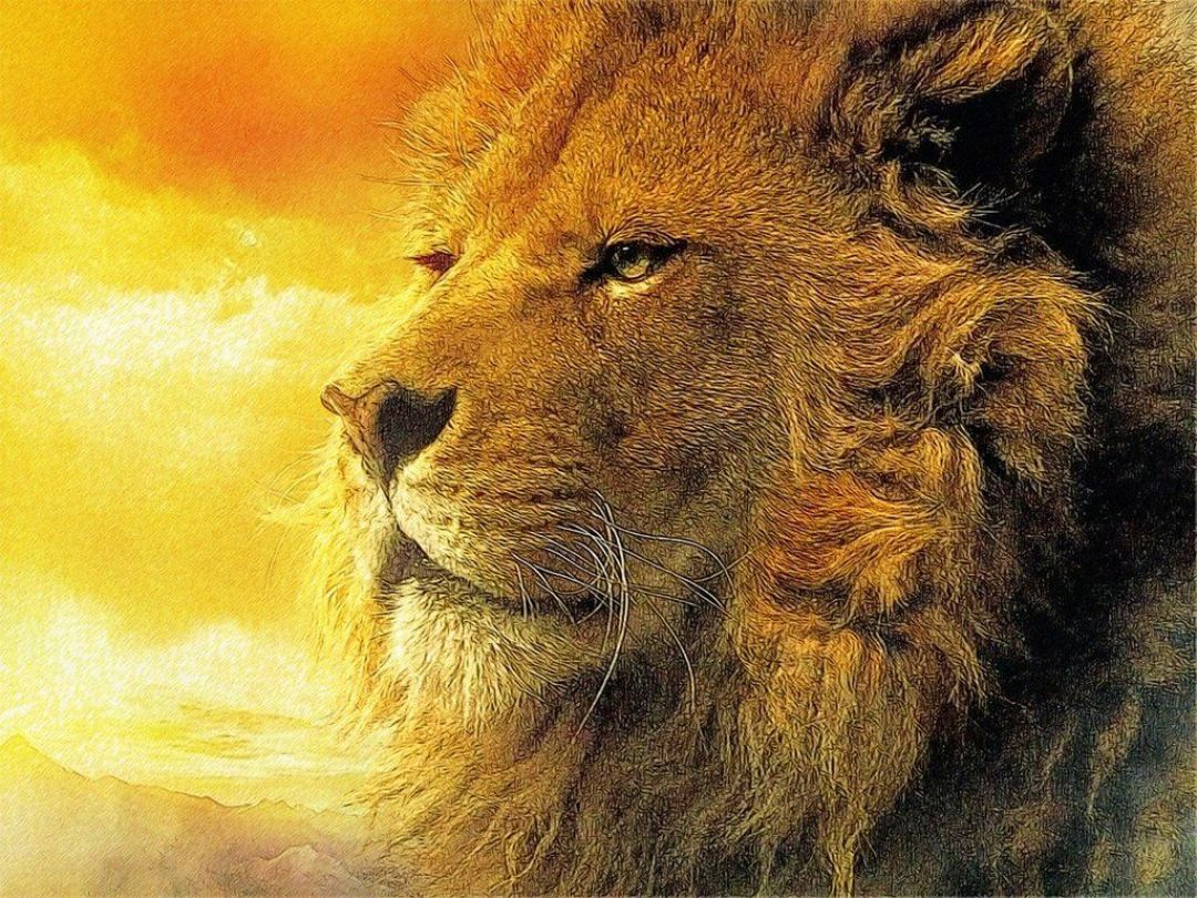 Epic Lion Hd Wallpapers 1080p 4k 37854 1080x810 Download Hd Wallpaper Wallpapertip