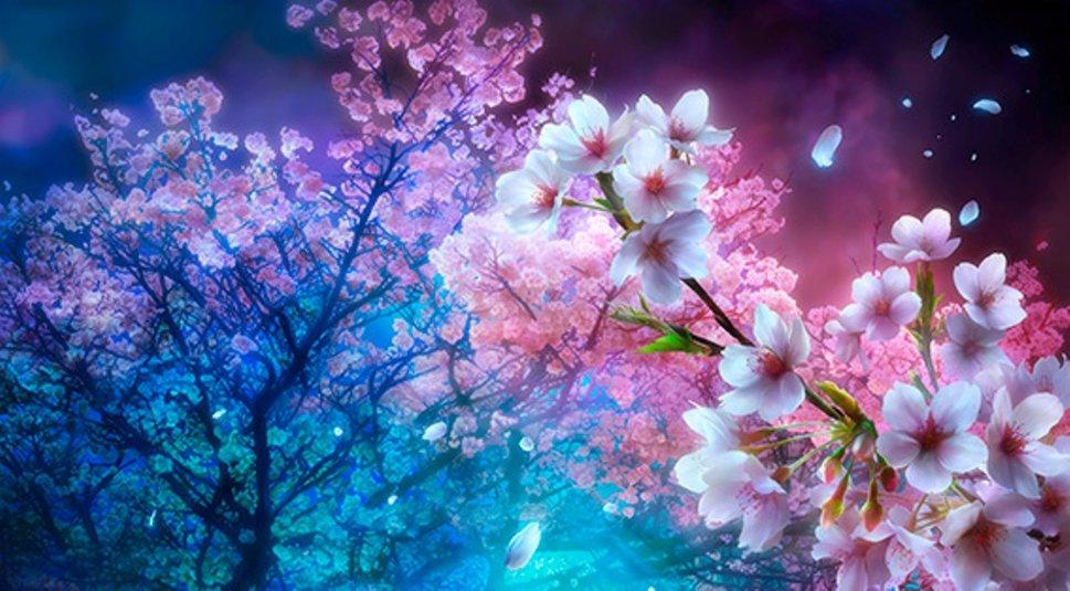 Animated Cherry Blossom Tree Wallpaper Cherry Blossom Night Cherry Blossom Tree Background 969x535 Download Hd Wallpaper Wallpapertip
