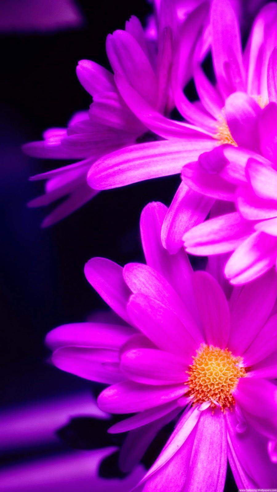 Flower Wallpapers Iphone 6 900x1600 Download Hd Wallpaper Wallpapertip
