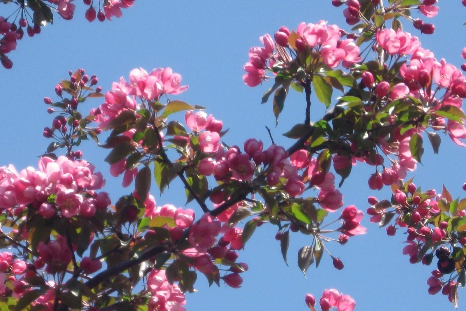 paysage fond d ecran fleurs du