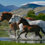 Horse Wallpaper For Laptop 1920x1200 Download Hd Wallpaper Wallpapertip