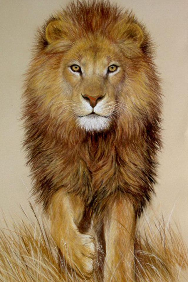 Gambar Singa Lengkap Lion Images Hd Download 600x900 Download Hd Wallpaper Wallpapertip