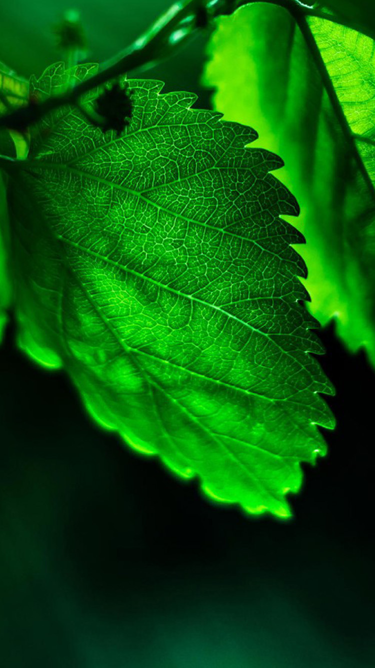 Green Hd Iphone Wallpapers Green Leaves Iphone Wallpaper Hd 750x1334 Download Hd Wallpaper Wallpapertip