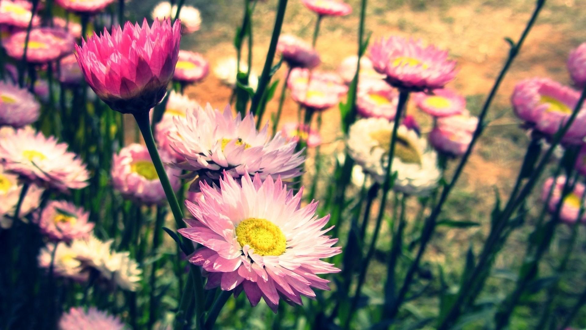 fond de bureau fleurs vintage fond d