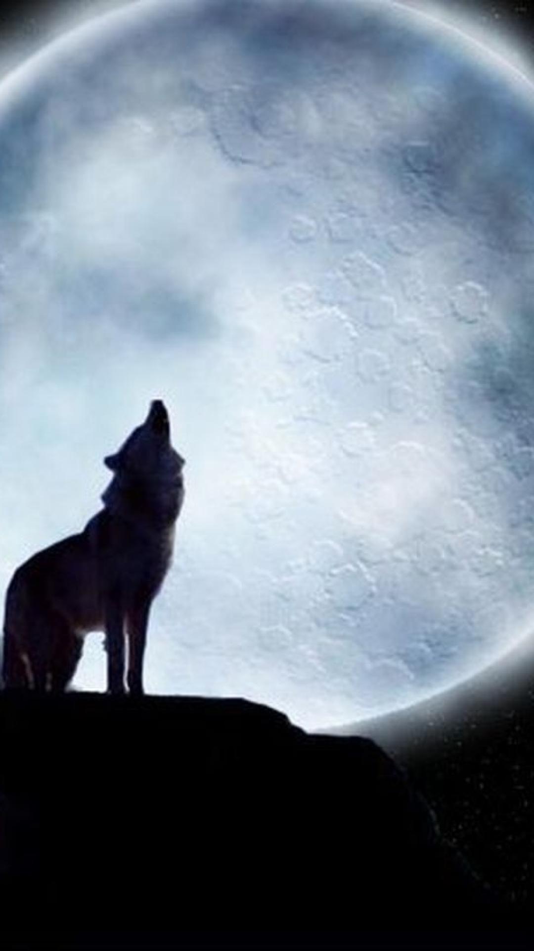 Lone Wolf Wallpaper Wolf Hd Wallpaper For Iphone 1080x1920 Download Hd Wallpaper Wallpapertip