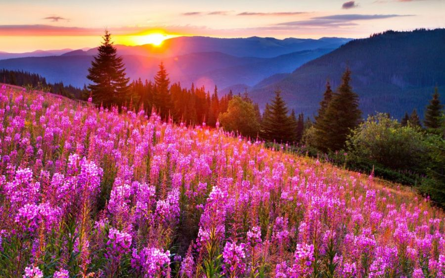 Filed nature sky sun flowers mountain green wallpaper   2560x1600     filed nature sky sun flowers mountain green wallpaper