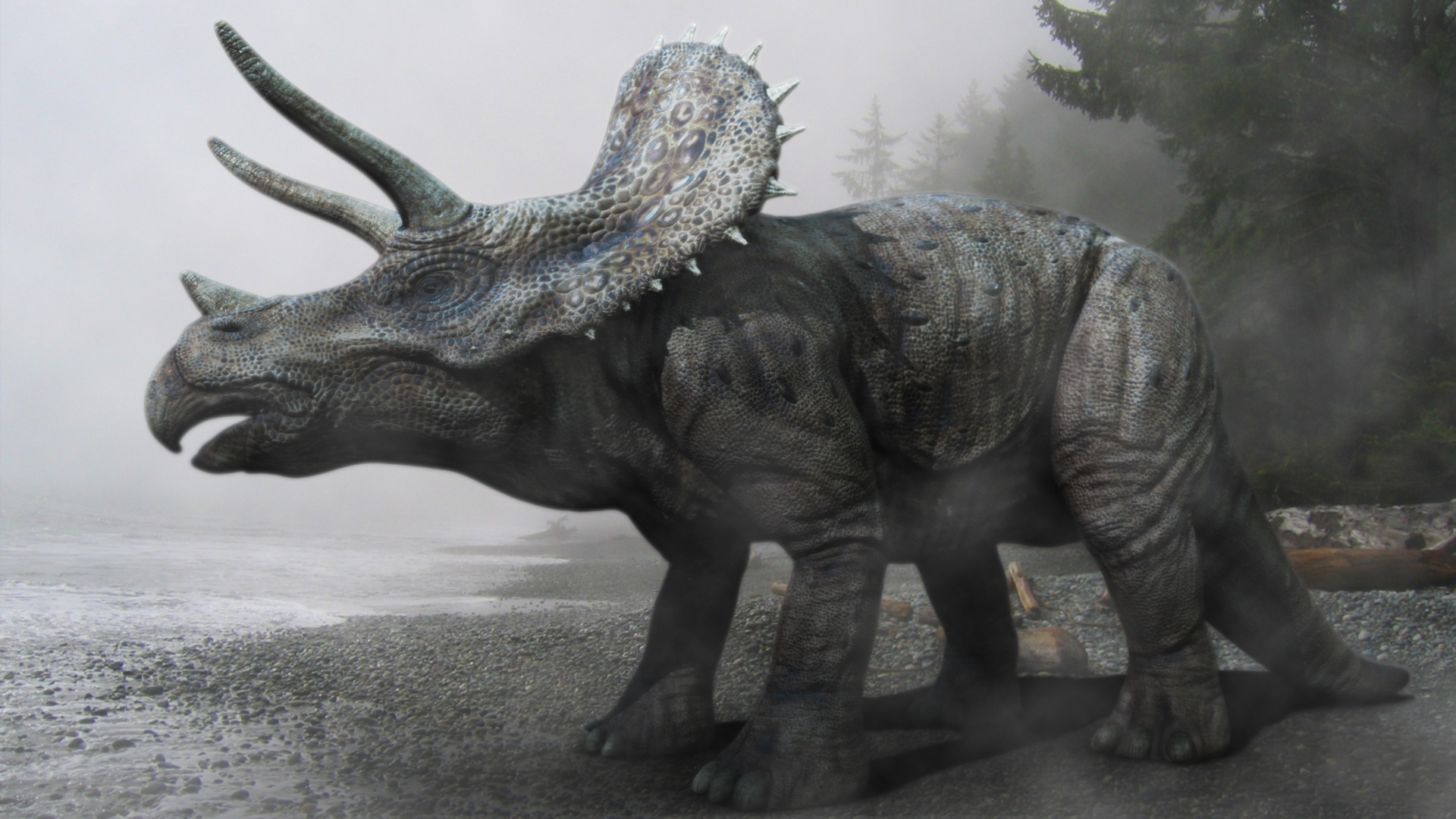 Triceratops Reptil Animales Extincion Wallpaper