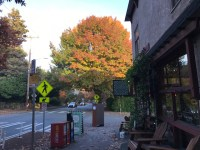 Update on Trees on N 40th St – City Arborist Talk 7pm on Nov 7th