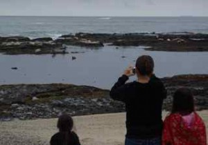 Families come to snap shots of harbor seals at FMR.