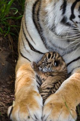 Julie and one of her cubs.