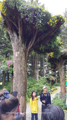 Beautiful trees in Glacier Gardens, Juneau, Alaska   wandasknottythoughts.com
