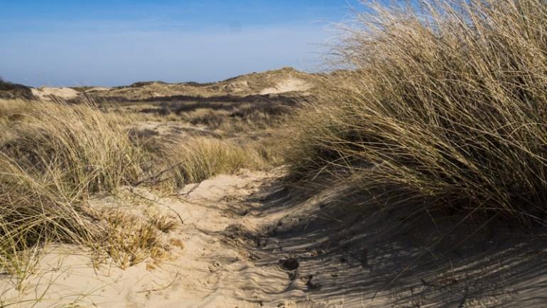 Duinen tussen Den Haag en Katwijk