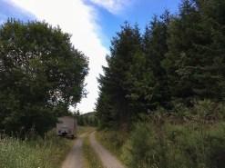 Mitten in der Natur, an einem Waldweg stand mein Schäferwagen. Ruhe satt.