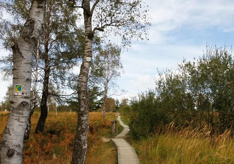 Holzsteg durch das Naturschutzgebiet Struffelt