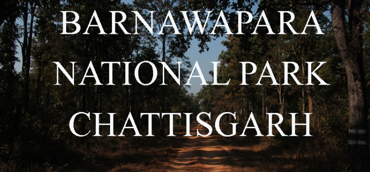 Exploring Barnawapara National Park, Chattisgarh