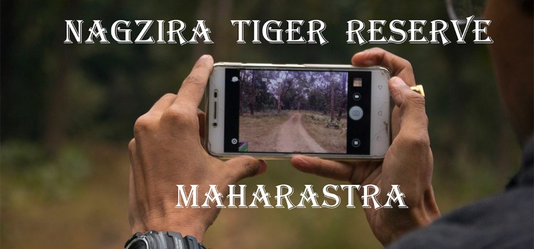 Into Leopard trails: Nagzira Tiger Reserve, Maharastra