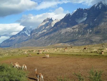 patagonia-303342_640