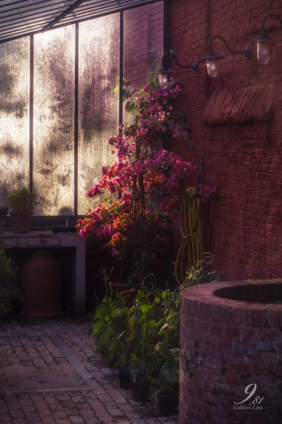 Botanische Tuin Leuven-16