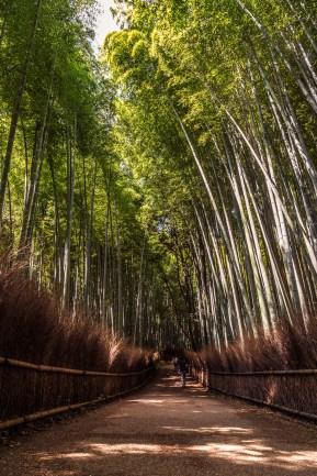 Kyoto-2015[BLOG]-42
