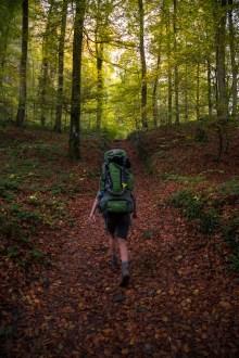 Mullerthal Trail-5