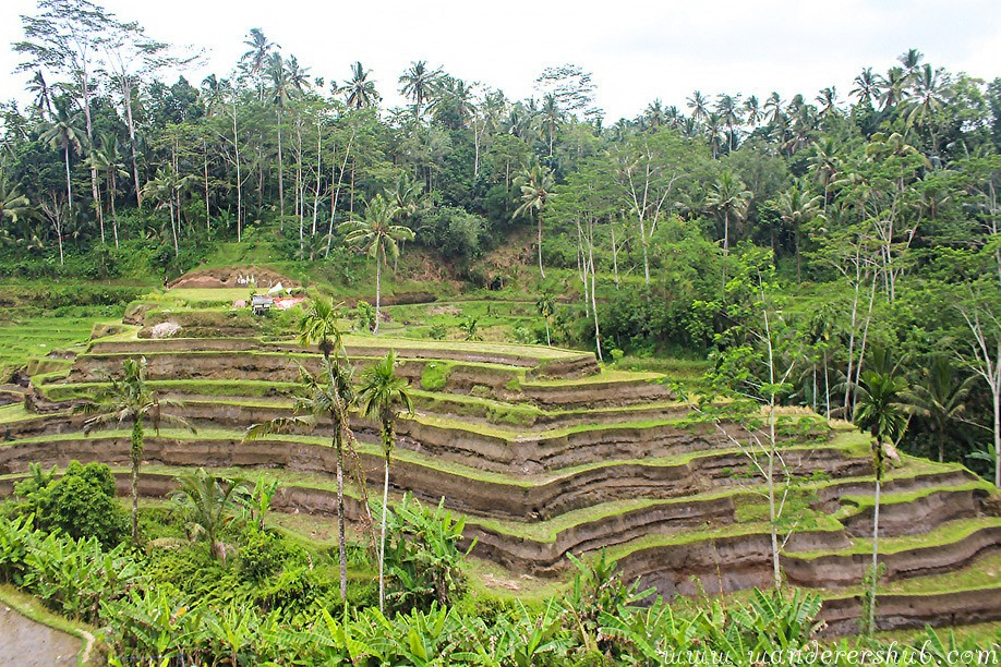 Tegalalang Rice Terrace in Ubud Bali