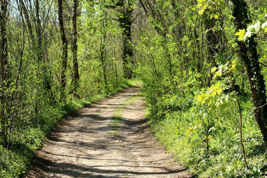 Wald, Frühling