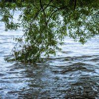 Halbtageswanderung am Rhein und im Schwarzwald, 29.06.19