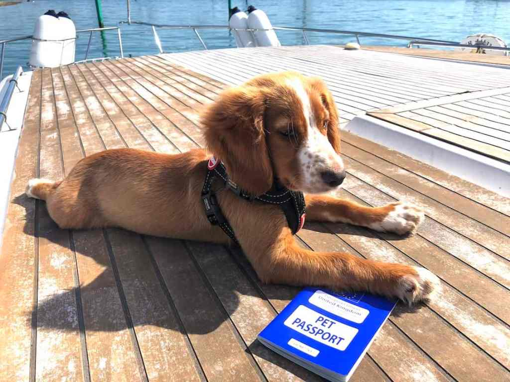 How long does it take to get a Pet Passport? What jabs does your dog need? How much does it cost? This guide answers all these questions and more so you can continue to enjoy your adventures with your favourite companion. #petpassport #petpassportdogs #petpassporttravel #pet #travel #dog #passport #roadtrip #UK #europe