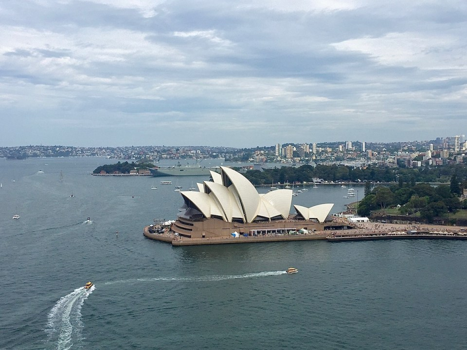 Sydney Harbor View Wandering Chocobo